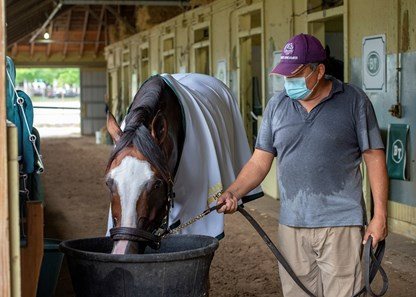ELMONT, NY-Sackatoga Stable's Tiz the Law, and trained by Barclay Tagg, gets a drink of water with hotwalker Abraham Riverta, before getting a bath, after breezing five furlongs after the break with Manny Franco in the irons, Wednesday, July 8, 2020.