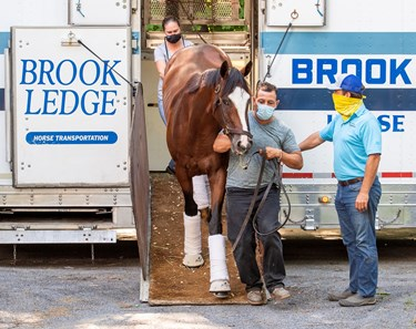Tiz the Law is lead from a horse van from Belmont Park as he returns to Saratoga Race Course July 13, 2020 in Saratoga Springs, N.Y. to prepare for his next race, The Travers Stakes on August 8th