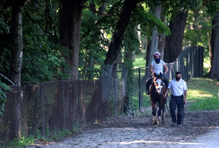 Tiz the Law returns to the barn after a breeze on the main track Saturday July 25, 2020 at the Saratoga Race Course in Saratoga Springs, N.Y.