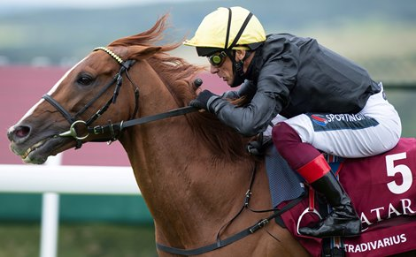 Stradivarius Aims for Fifth Goodwood Cup Success