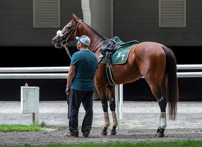 ELMONT, NY-Sackatoga Stable's Tiz the Law, and trained by Barclay Tagg, stops and listens in the paddock with foreman/groom Juan Barajas Saldana, before breezing five furlongs after the break with Manny Franco in the irons, Wednesday, July 8, 2020