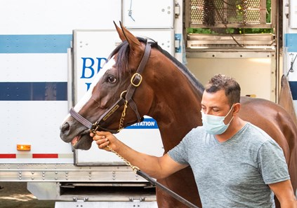Tiz the Law is lead from a horse van by stable foreman Juan Barajas from Belmont Park as he returns to Saratoga Race Course July 13, 2020 in Saratoga Springs, N.Y. to prepare for his next race, The Travers Stakes on August 8th