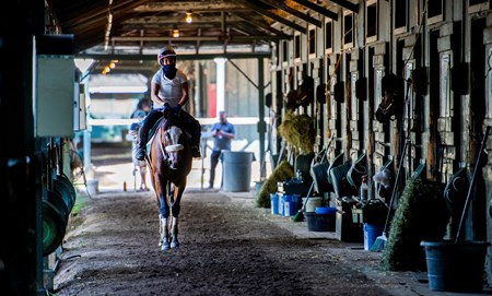 Tiz the Law returns to the barn after a breeze on the main track with exercise rider Heather Smullen Saturday July 25, 2020 at the Saratoga Race Course in Saratoga Springs, N.Y.