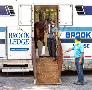 Tiz the Law is led from a horse van from Belmont Park as he returns to Saratoga Race Course July 13, 2020 in Saratoga Springs, N.Y. to prepare for his next race, The Travers Stakes on August 8th
