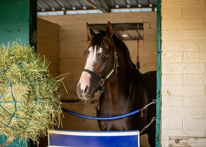Honor A. P. in his stall at Del Mar Thoroughbred Club on July 12, 2020.