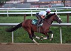 Tiz the Law works Aug. 1 at Saratoga Race Course