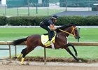 King Guillermo works Aug. 22 under Miguel Mena at Churchill Downs