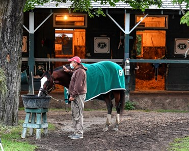 Tiz the Law cools out in the Barclay Tagg racing stable barn area after one of his final preparatory works before the Kentucky Derby Sunday Aug.23, 2020 at the Saratoga Race Course in Saratoga Springs, N.Y. Photo by Skip Dickstein