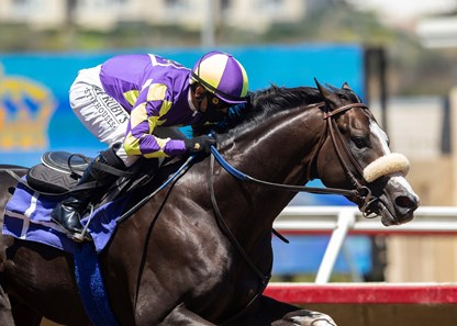 Honor A. P. - Del Mar, August 29, 2020