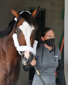 September 1, 2020: Kentucky Derby favorite Tiz The Law at Churchill downs, being led around the barn by exercise rider heather Smullen... Rick Samuels/The Blood-Horse