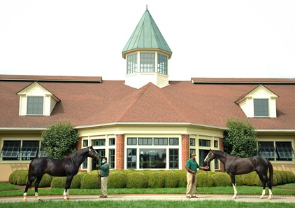 September 15, 2020: Honor Code (L) and Honor A.P.. at Lane's End Farm in Versailles, Ky.