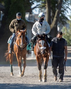 Elmont, NY- Trainer Barclay Tagg follows close behind, as Sackatoga Stable's Tiz the Law, with Juan Barajas Saldana, walks back to the barn after galloping over Belmont Park's main track, after the break, with Robin Smullen in the irons, Saturday, Sept. 19, 2020