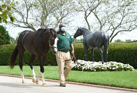 September 15, 2020: Honor A.P.  walking past the statue of his grandsire A.P. Indy at Lane's End Farm in Versailles, Ky. Rick Samuels/The Blood-Horse