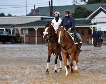 September 2, 2020: Kentucky Derby favorite Tiz the Law waiting to enter the track Wednesday morning