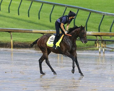 Storm the Court - Gallop - Churchill Downs - 09-03-2020