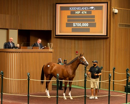 The Into Mischief colt consigned as Hip 474 in the ring at the Keeneland September Sale