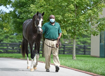 September 15, 2020: Honor A.P. at Lane's End Farm in Versailles, Ky. Rick Samuels/The Blood-Horse