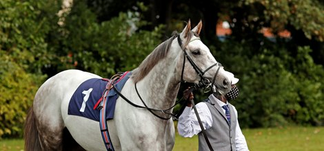 St. Leger Hero Logician to Stand at Shade Oak Stud