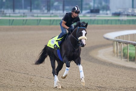 Honor A. P. gallops at Churchill Downs Sept. 1 in preparation for the Kentucky Derby