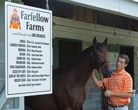 Farfellow Farms Returns to Consignors Ranks