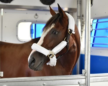 September 1, 2020: Kentucky Derby favorite Tiz The Law on the van heading to Churchill Downs...