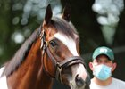 Tiz the Law Sept. 2 at Churchill Downs