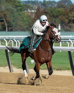 Elmont, NY-Sackatoga Stable's Tiz the Law, galloping over Belmont Park's main track, after the break, with Robin Smullen in the irons, Saturday, Sept. 19, 2020