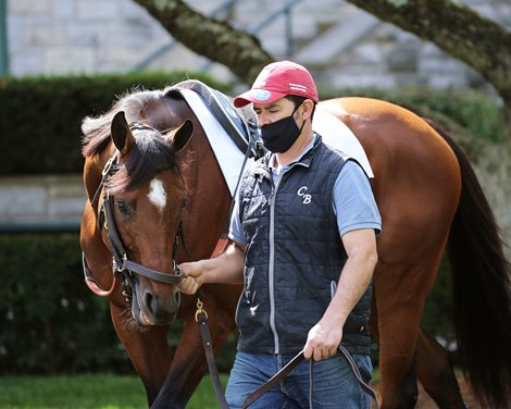 Without Parole Retired to Stand at Newsells Park Stud