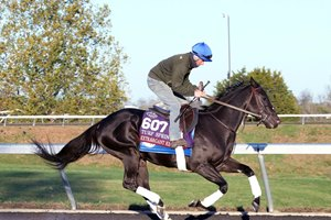 Extravagant Kid trains ahead of the 2020 Breeders' Cup at Keeneland