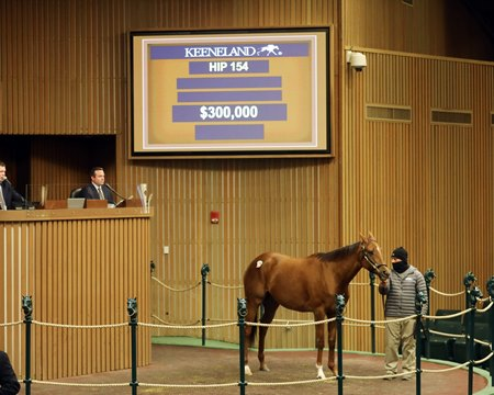 Beau Belle in the ring at the Keeneland January Sale