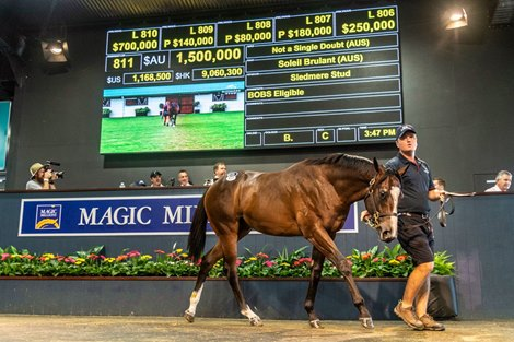 Coolmore Lands Pricey Son of Not A Single Doubt