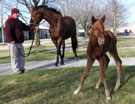 Sealy Hill at Fasig-Tipton in February 2013 with her newborn Distorted Humor filly, later named True Elegance