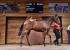 Lot 504 at 2021 Inglis Premier Yearling Sale