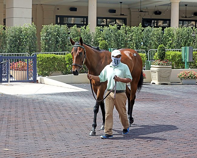 .6 Million Nyquist Colt Tops The Gulfstream Sale