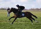 Lot 50, 2021 Tattersalls Craven Breeze Up Sale 12/04/21