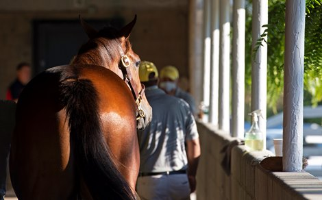 Remarkable Keeneland September Sale Wraps With Records